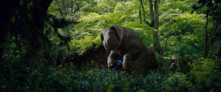 VIDA FILMS AUG 2017 Okja 3